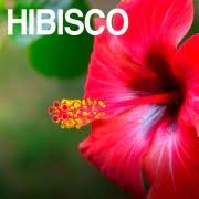 Hibisco, súper planta que cuida tu salud