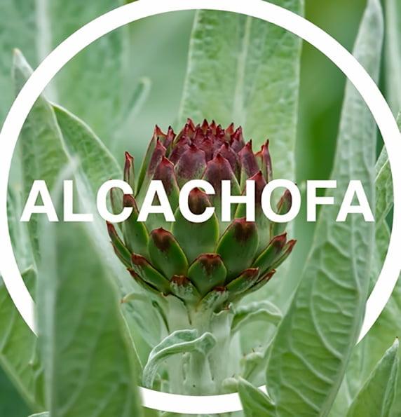 Alchofa e infusión Colesterol de Susarón