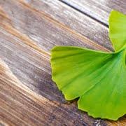 5 plantas medicinales que no debes perderte