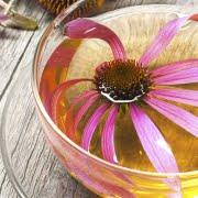 banner susaron equinacia 180x180 - El regaliz, una planta mediterránea perfecta para el calor