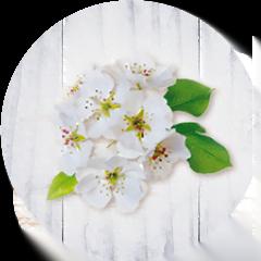espino-blancos