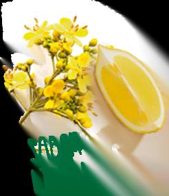 sabor limón - Slim Mate